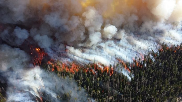 Sensors now can Detect Wildfires